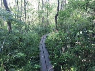 072617 - Raised Trail