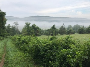 080217 - Fog