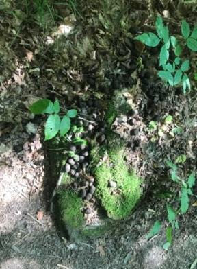 081717 - Moss