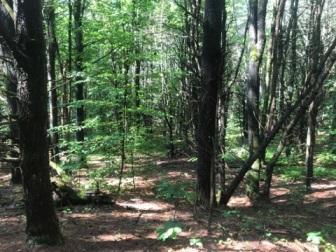 081917 - Trail